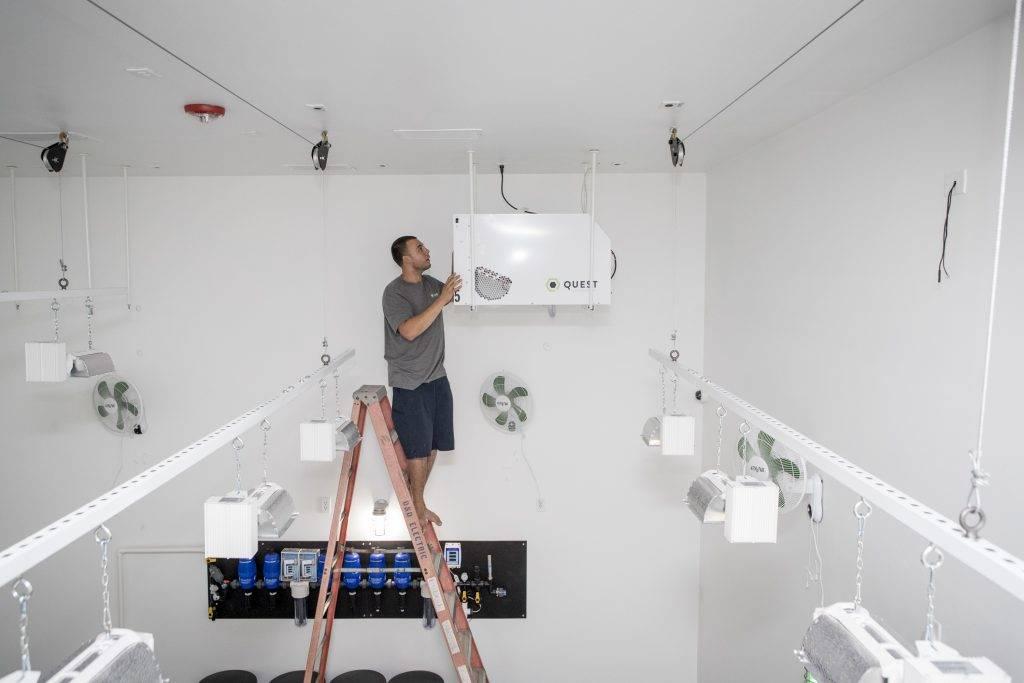 Why Run A Dehumidifier in Grow Room?